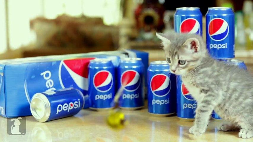 Magic Mike XXL (Cute Kitten Edition)