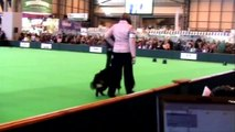 crufts 2009 obedience championship - Janet & Dallas