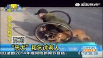 Loyal Canine Helps Push Its Paralyzed Owner Through The Streets In China