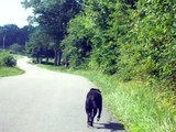Dog Gone Amazing Grace! Dog Lilly that leads the car to church every Sunday morning