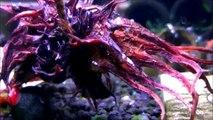 Szopen's Shrimps - Bez Tajemnic