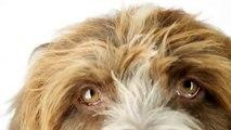 Nexgard (afoxolaner) Chews for Dogs: 2014 Consumer Ad Long