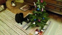 The crazy speaking cats Nikki & Kathi cleaning up Christmas-tree (deutsche Sprechblasen)