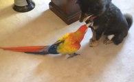 Macaw Papağanı Köpekleri Isırıyor