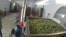 OLIOMIO 200 SINTESI - Olive oil mill - Moulin à huile - Oleificio
