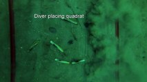 Video A2: Sample video from FV Ensis: invertebrate recovery following electrofishing activity