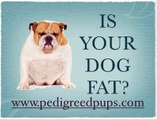 Is Your Dog Fat? - Is My Dog Fat? - Is Your Dog Overweight?