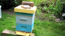 Fun with Bees - Adding an extra brood chamber.