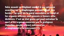 La triste vie des éléphants du cirque Arlette Grüss