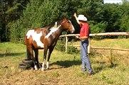 Jeździectwo Naturalne Bez Tajemnic JNBT