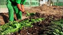 Manejo de Residuos: Aprovechamiento de Residuos Orgánicos.avi