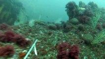 chasse sous marine Ct Off, Un très très gros poisson...