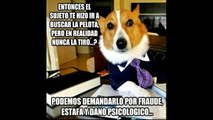 Funny animals photos compilation june in spanish.