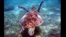 Marineland TV - Reportage N°75 - La Fondation Marineland pour la sauvegarde des tortues marines