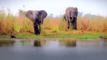 Animal Planet | Discovery Channel | Wild Life Documentary 2015 | National Geographic Wildlife #17