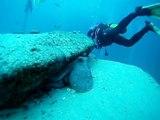 Tauchen Fuerteventura - Jandia - Großes Muränenriff - Großer Octopus - Oktober 2012 - Stevie