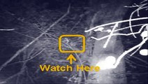 Bigfoot Face on Trail Cam???