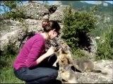 marmots milka fun marrant marmottes tyrolienne hautes alpes france