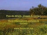 Ferme a vendre - Farm for sale - Mohammedia - Maroc - Morocco