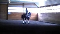 Leanos, 3rd level imported dressage gelding for sale at Five Stars Farm