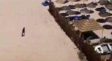 Attentat en Tunisie : le suspect filmé sur la plage après l'attaque