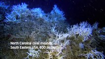5-minute documentary on cold-water corals narrated by Sir David Attenborough