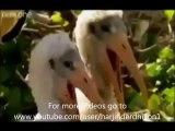 Funny animals speaking Punjabi.very funny must watch