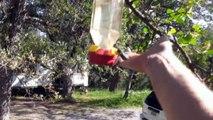 Aider un petit colibris piégé dans un réservoir d'eau