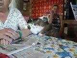 Zorla İlgi İsteyen Sevimli Kedi