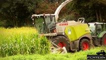 Maisfilm 2013. Claas Jaguar 980 Feldhäcksler in der Mais Ernte. Mais häckseln 2013 mit voller Kraft