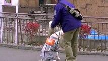 盲導犬を見たホッキョクグマ~Test~A seeing eye dog is made to stand before Polar Bears