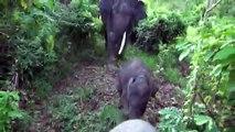 WWF インドネシア スマトラ島 子ゾウのトミィ