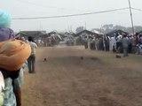 tent pegging by marwari horses