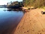 "Abbie the Nova Scotia Duck Tolling Retriever - 7.5 Months - ""Tolling"""