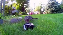 One Frisky Cat and Two Cute Baby Skunks 2 by Suburban Wildlife Control - 1 Funny Kitty