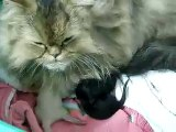 Mi gata Lola - Lola da a luz a tres maravillosas criaturas