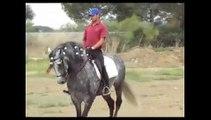 PRE ANDALUSIAN HORSES PURA RAZA ESPNOL ANDALUSIER SPANISH HORSE PFERD CABALLO CAVALLO.flv
