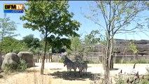 Pic de chaleur: les animaux du zoo de Vincennes aussi ont chaud