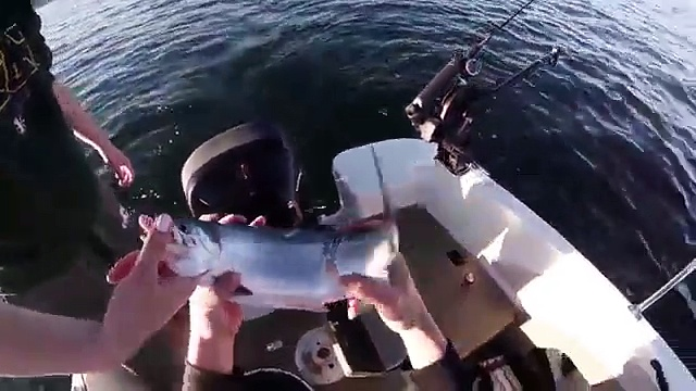 Strawberry kokanee fishing 6-20-15