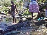 Biche Village eels feeding