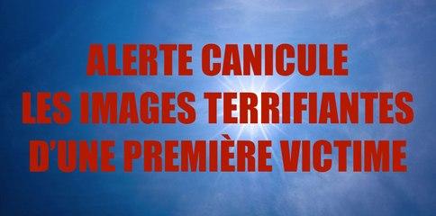 ALERTE CANICULE : images terrifiantes d'une première victime