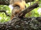 Oui les écureuils font caca...
