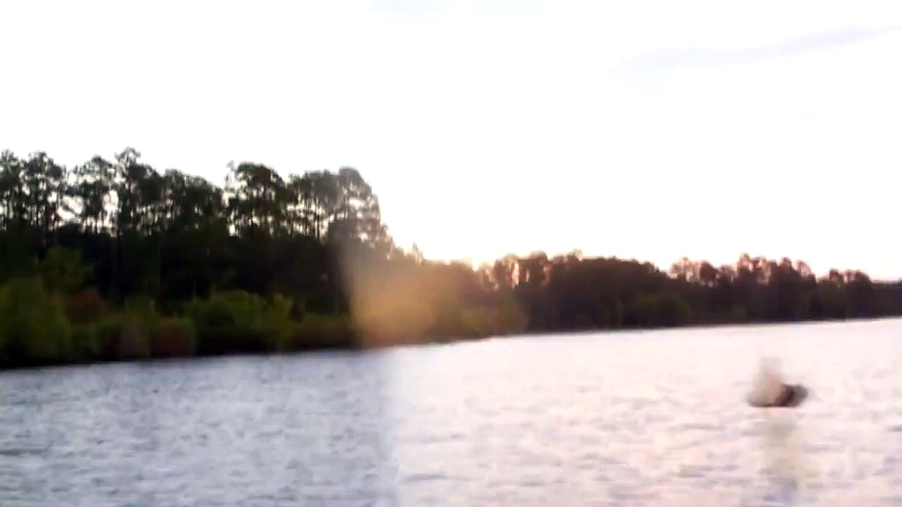 Big Bass Smashes Buzzbait in the Air Beside the Boat – Buzzbait Bass Fishing