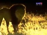 World Cup Fifa 2010 - Football Of Animals (Copa do Mundo Fifa 2010 - Futebol dos Animais)