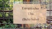 Video des Tages: Uhu Baby im Wildpark Saarbrücken