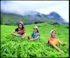 The Travel Planners, Kerala Tourism, Kerala Tour Packages, Kerala Honeymoon Tours, Incentive Tours