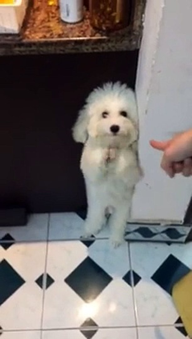 Funny video: cute dog 01