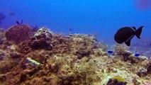 Scuba Diving in Cozumel - Dalila, Nurse Shark, Turtle GoPro