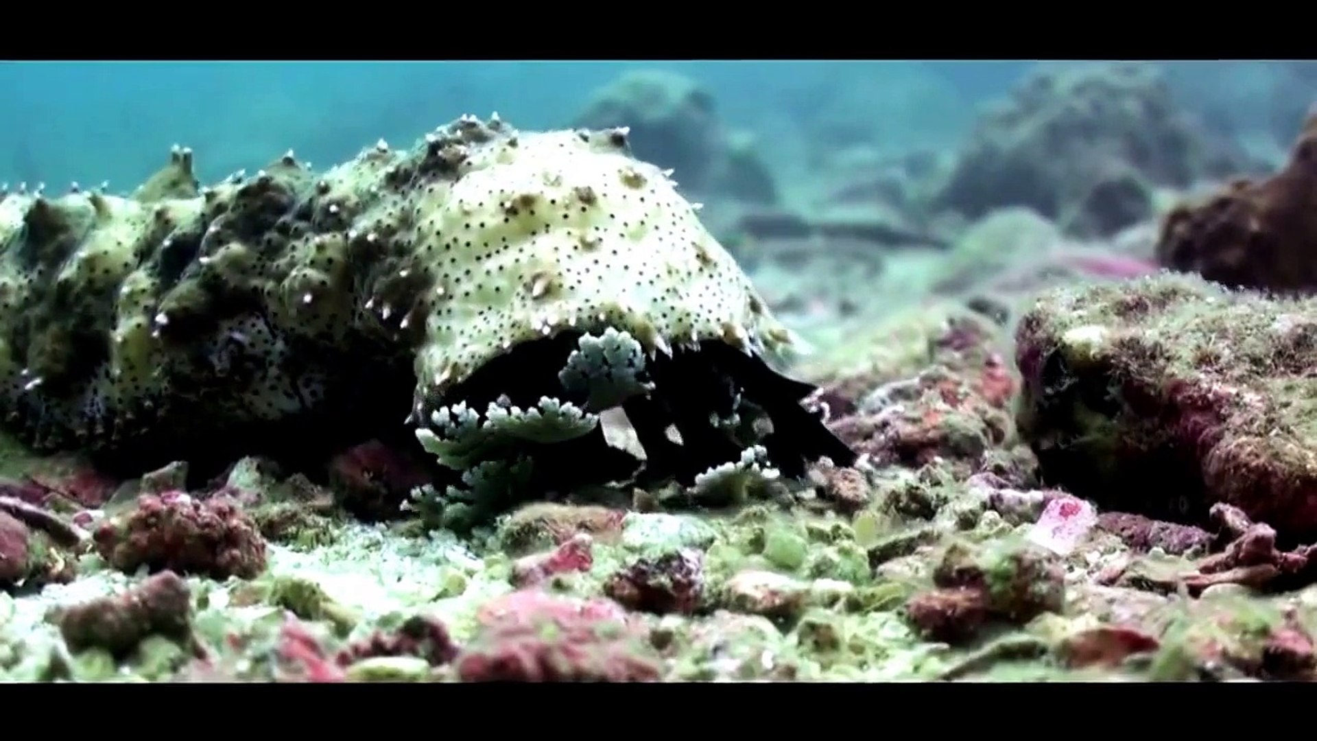 Animal Documentary | Adaptations of Marine Animals
