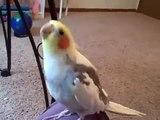 Headbanging Bird